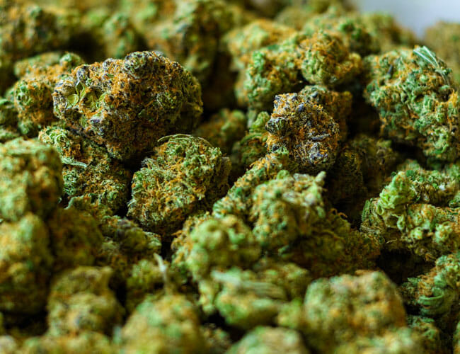 Marijuana 101: What You Required to Know Prior To Stocking Up on Weed