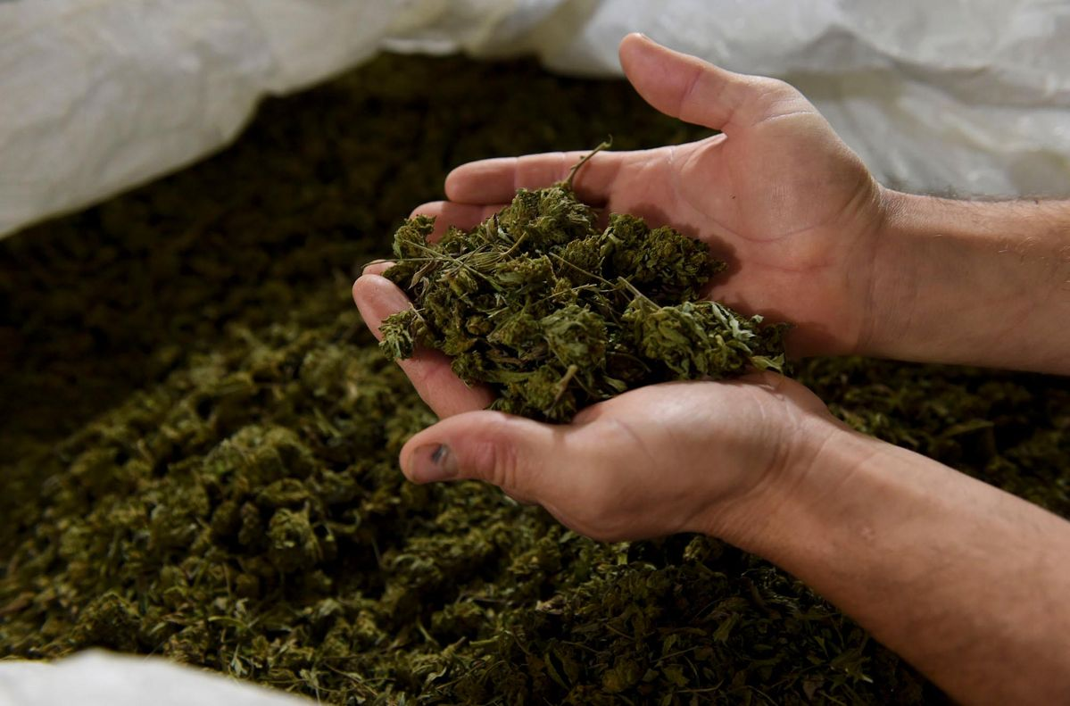 'Sheer' Decline In Hemp And Marijuana M&A Continuing Amid COVID-19 Pandemic