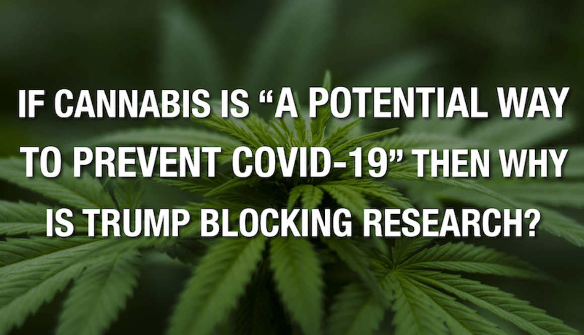 """If Cannabis Is """"A Potential Way To Prevent COVID-19"""" Then Why Is Trump Blocking Research?"""