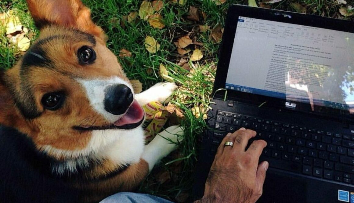 An author wrote a stunning homage to his late pet disguised as composing advice